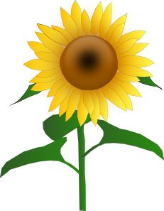 Sunflower clipart tall sunflower. Border clip art sunflowers