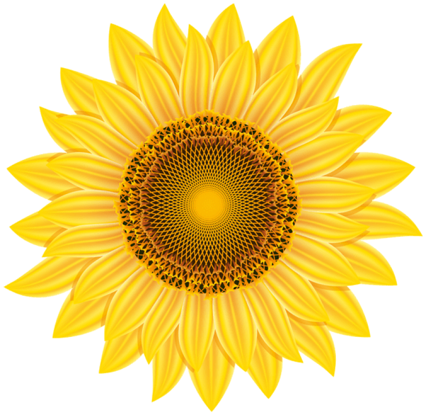 Sunflower clipart transparent. Yellow png free images