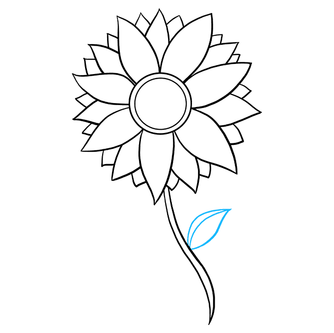 Drawing sunflowers basic. How to draw a