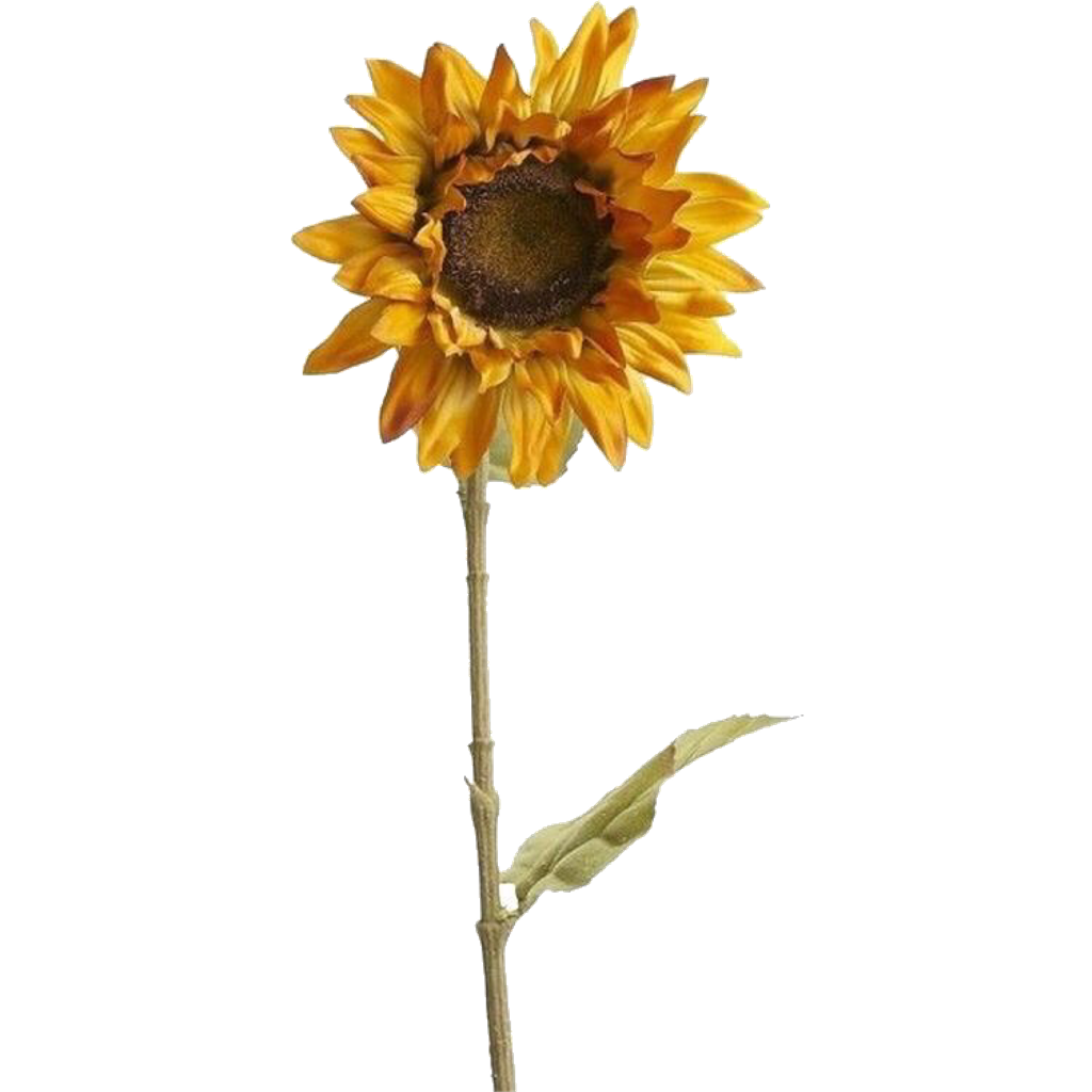 Sunflower png aesthetic. Yellow tumblr arthoe pngsticker
