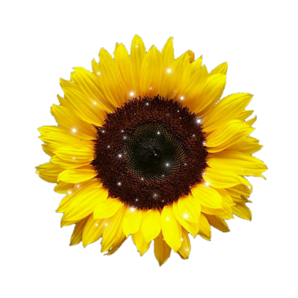 Sunflower png aesthetic. Yellow sparkles tumblr sticker
