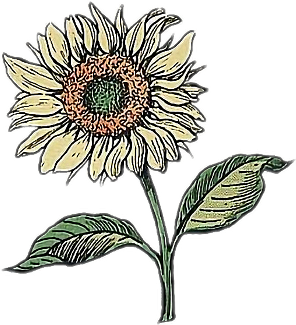 Sunflower png doodle. Drawing flower aesthetic sticker