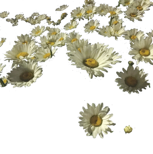 Sunflowers png transparent tumblr. Sunflower i spent hours