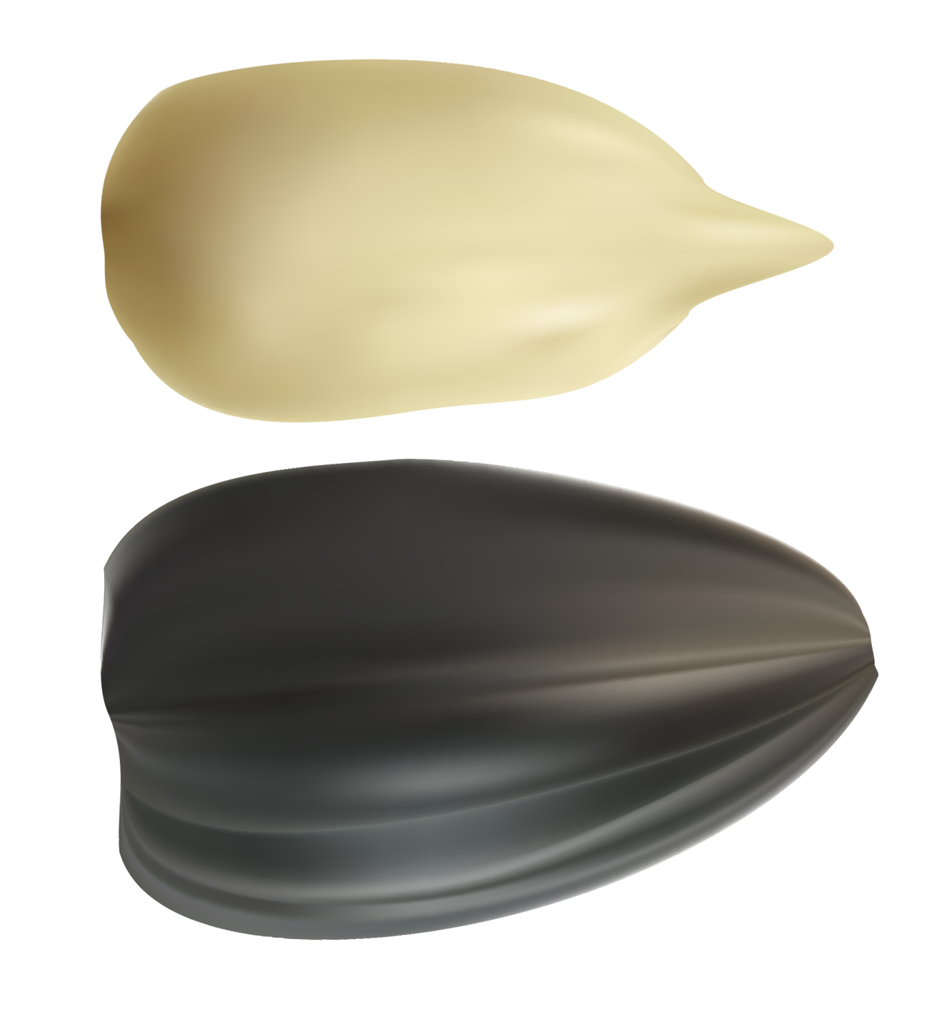 Sunflower seed png. Seeds clipart best web
