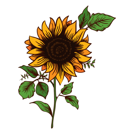 Sunflower silhouette png. Drawing transparent svg vector