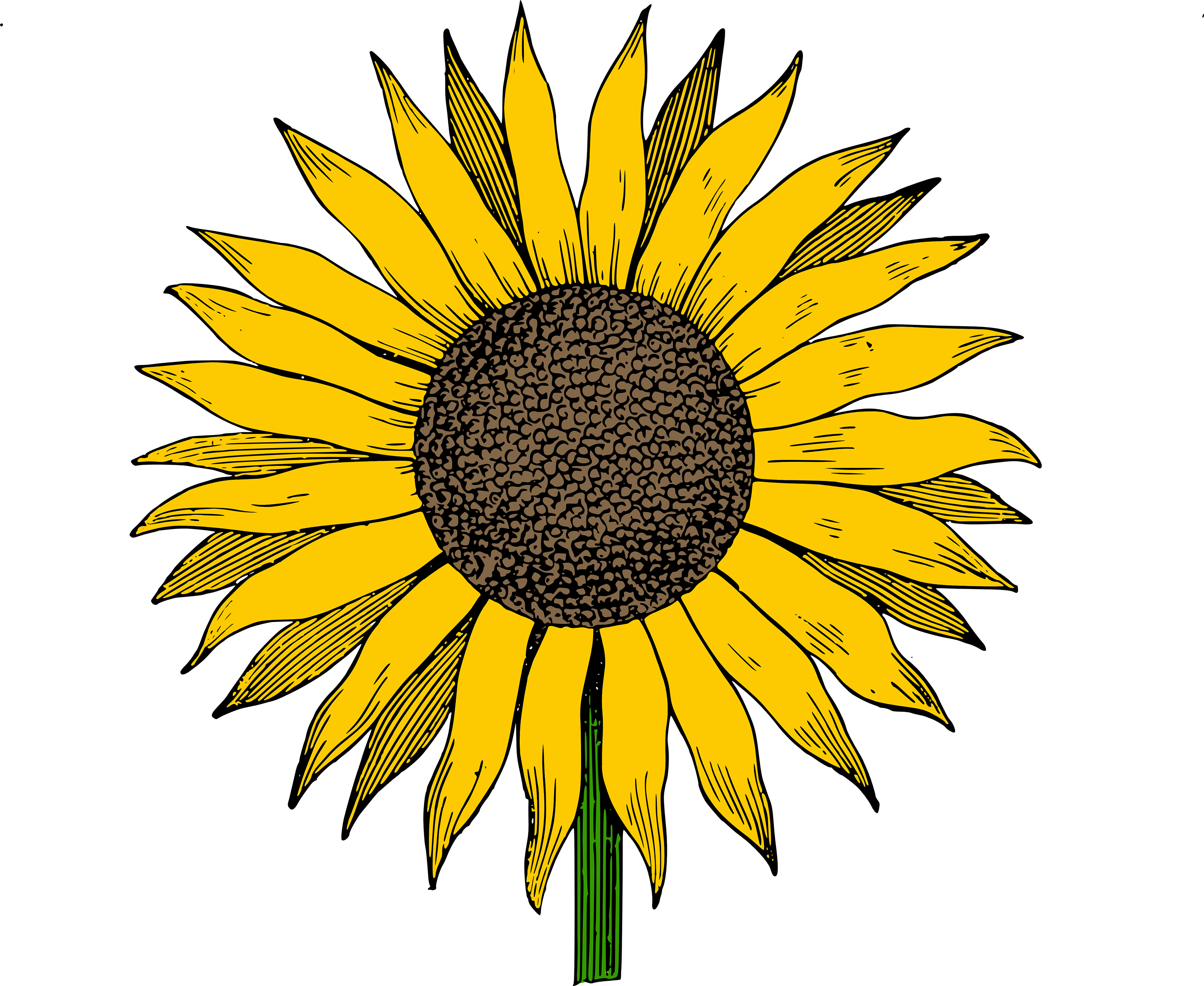 Sunflower vector png. Free clip art image