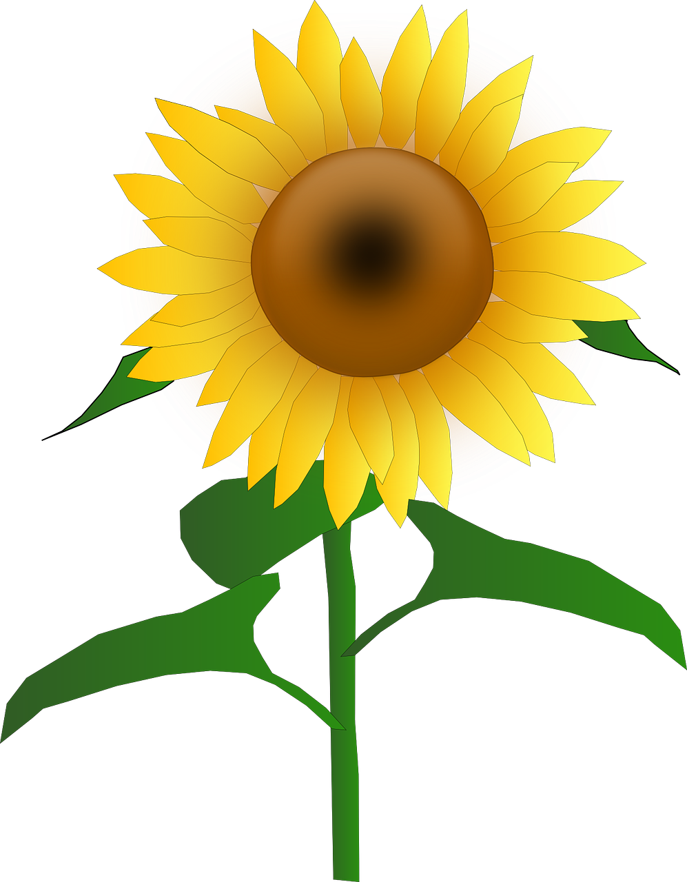 Sunflower vector png. Blooms blossom golden yellow