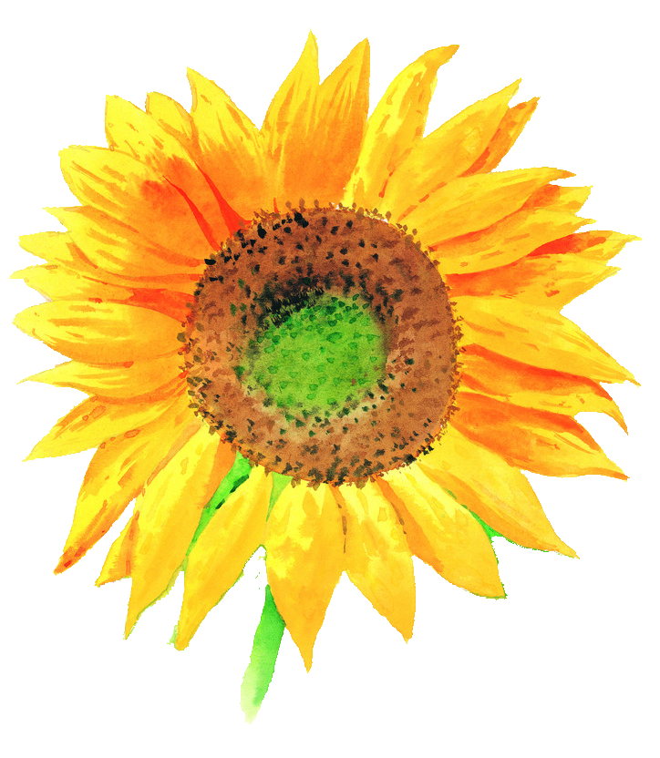 Sunflower clipart watercolor. Common painting png sector
