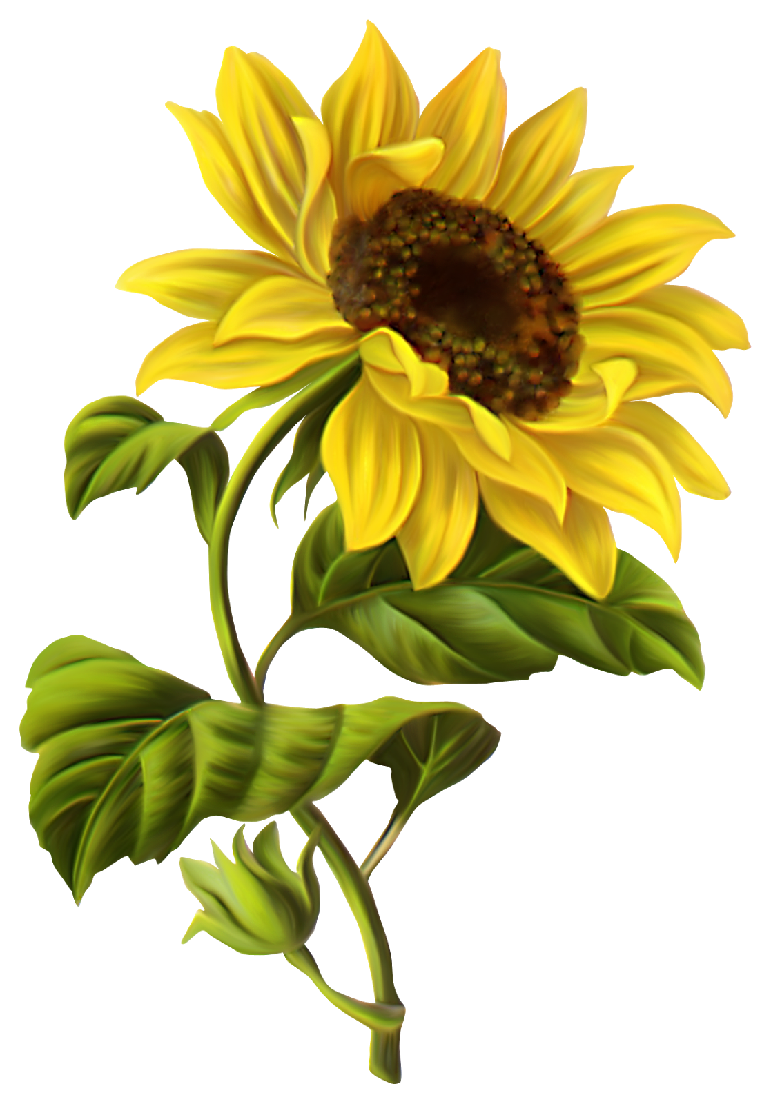 Watercolor sunflower png. Sunflowers google search pinterest