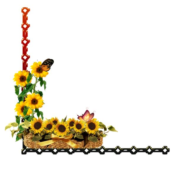 Sunflowers clipart divider. Sunflower free favourites by