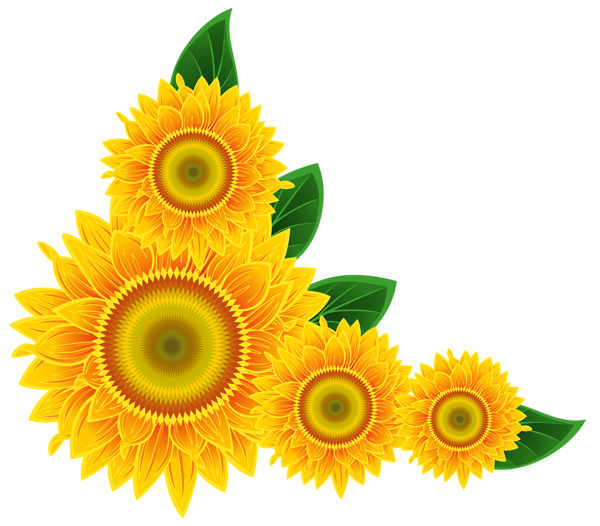 sunflower label png