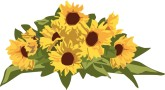 Sunflowers clipart divider. Search results for found