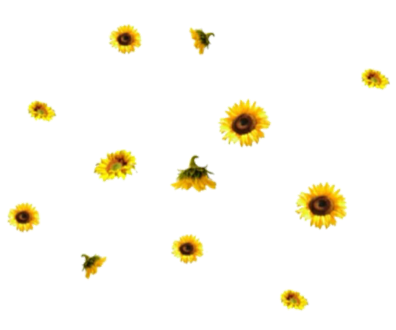 Sunflowers png aesthetic. Images about transparents