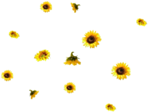 sunflower png aesthetic