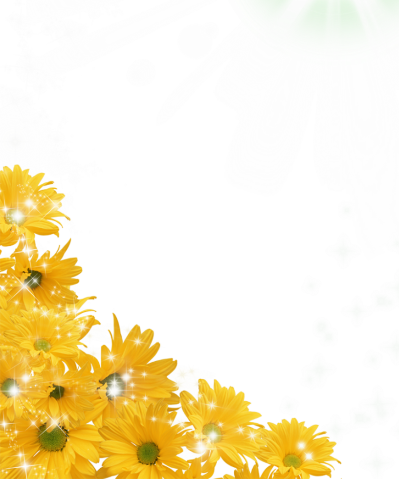Sunflowers png border. Sunflower transparent pictures free