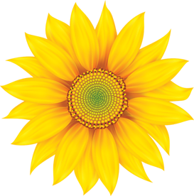 Sunflowers Png Frozen Fever Picture 2120978 Sunflowers Png