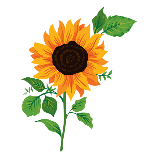 Sunflowers png individual. Sunflower illustrations pack vector