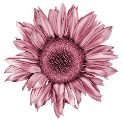 Sunflowers png pink. Sufy pinterest