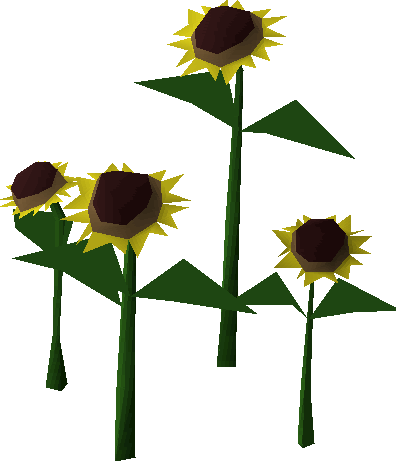 Sunflowers png root. Sunflower old school runescape