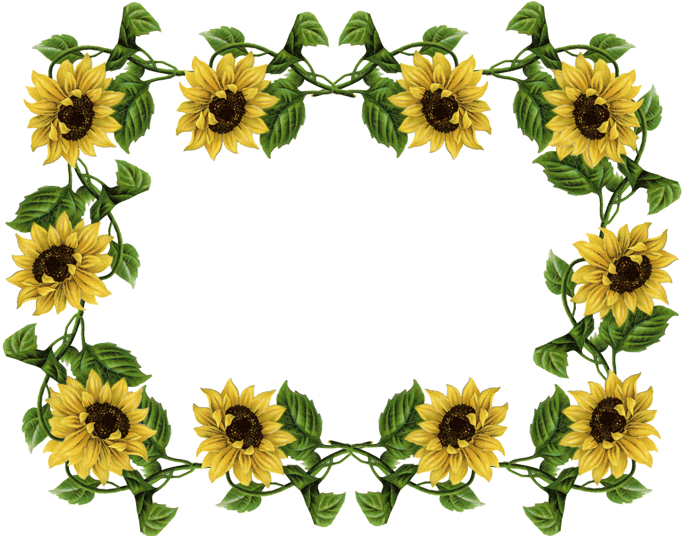 Sunflowers png row. Clipart sunflower huge