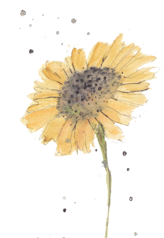 Sunflowers png simple watercolor. Flowers watercolors for beginners