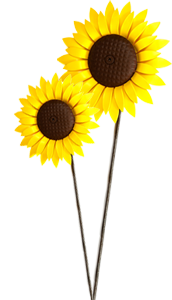 Sunflowers png tall. Teesside hospice event thank