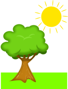 Under the clipart plant. Tree sunlight clip art