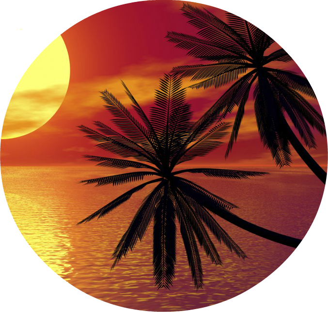 Tropical tree and sunset png. Image palm trees on