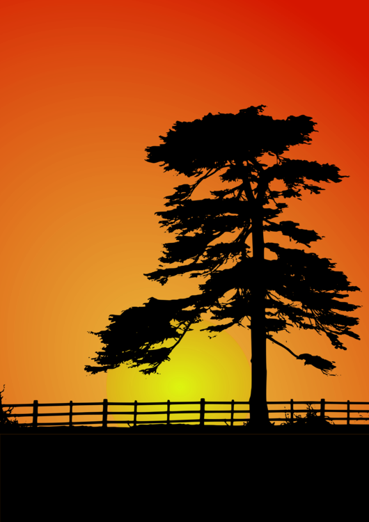 Drawing sunset abstract. Fence cedar tree computer