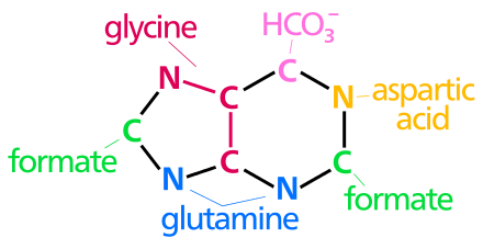 Svg events nucleotide. Nucleic acid metabolism wikiwand