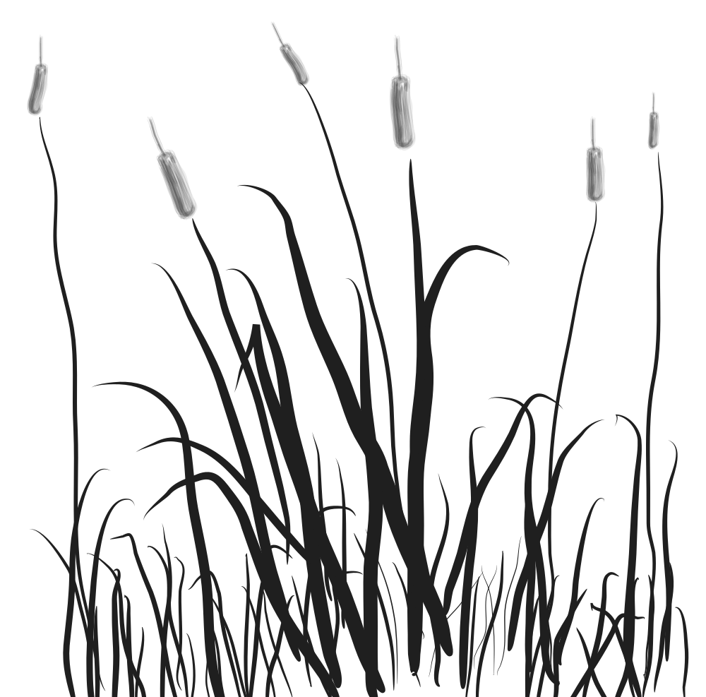 Swamp clipart marsh. Cat tails cattails clip