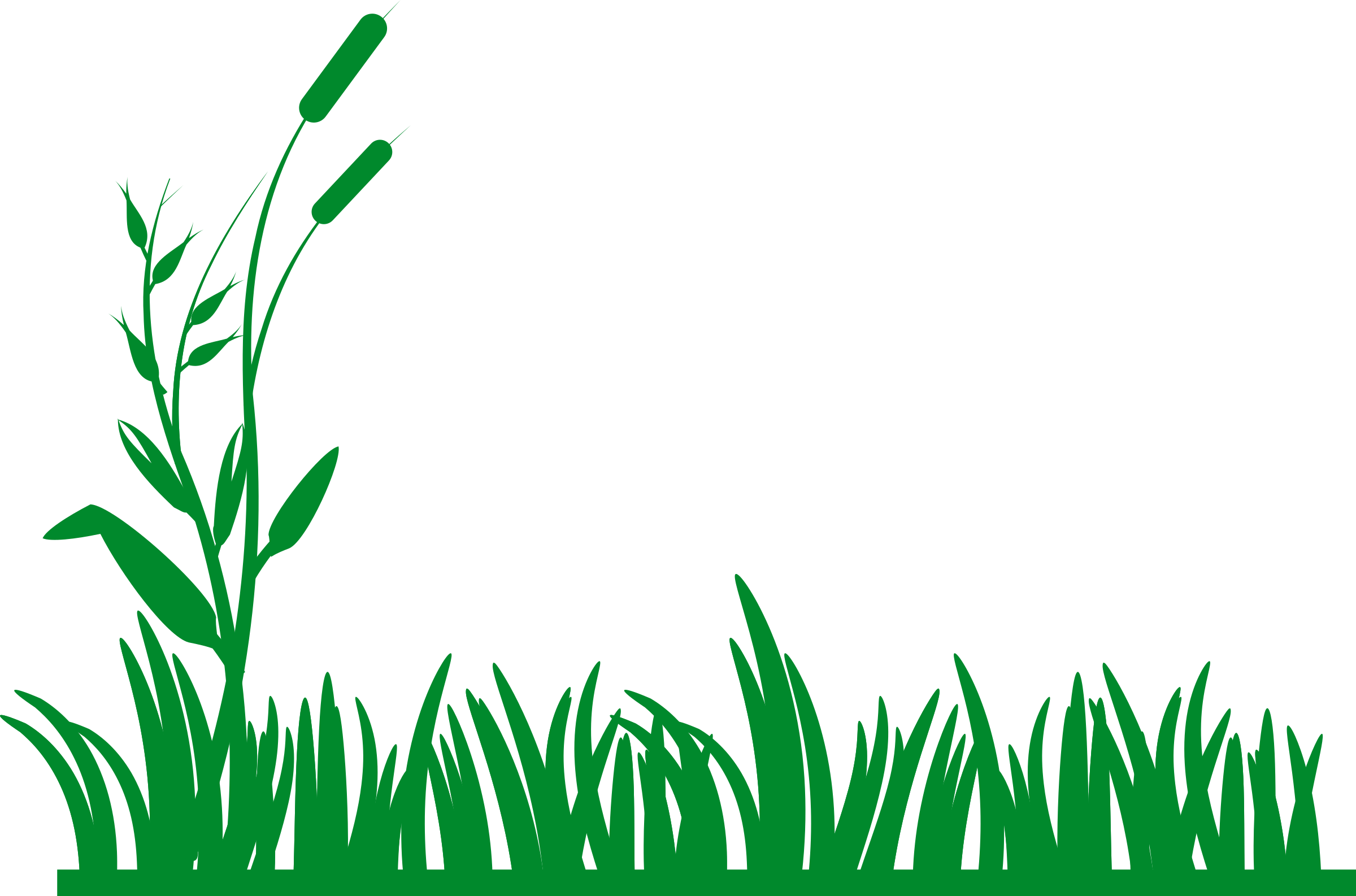 green drawing background