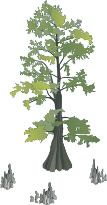 wetland drawing cypress tree