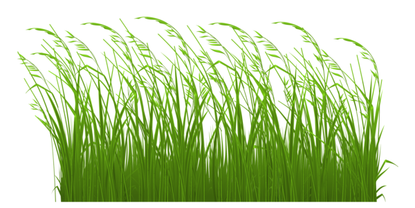 Swamp vector grass. Svg royalty free