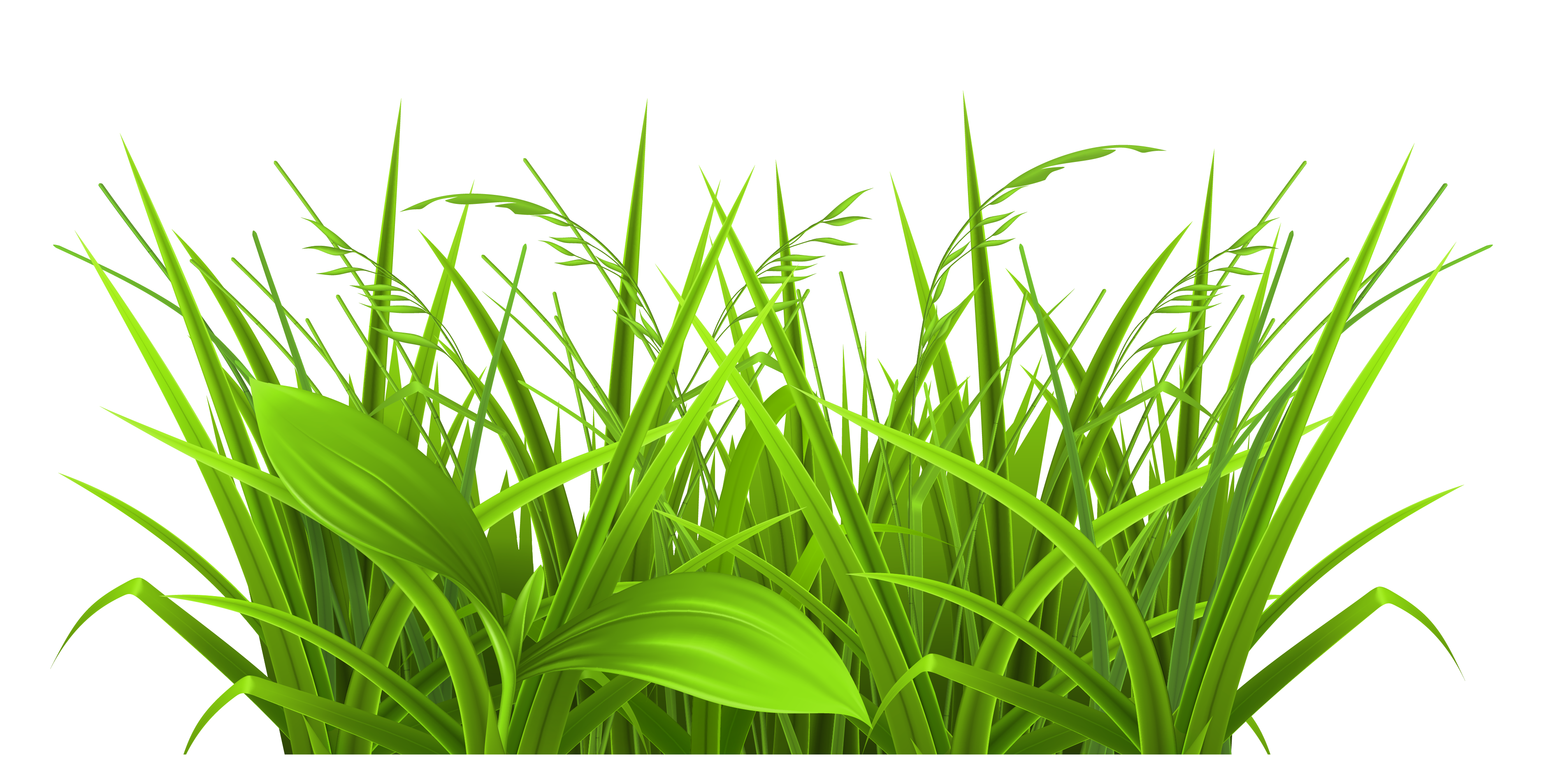 Swamp vector grass. Pond reed clipart