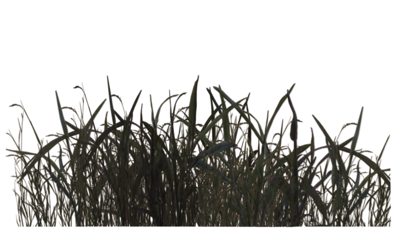 Swamp vector grass. Download free png by