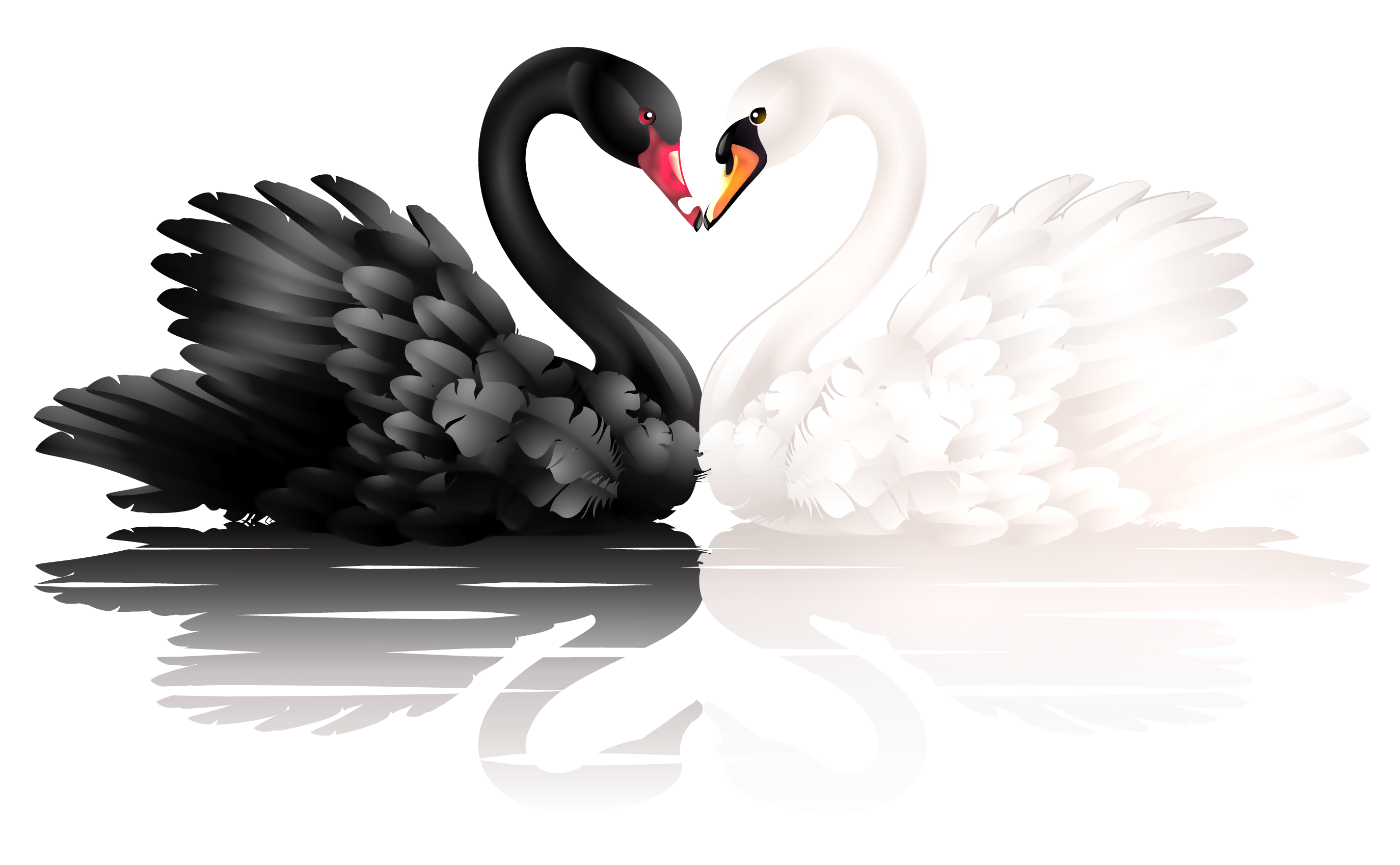 Swan clipart heart. White and black swans