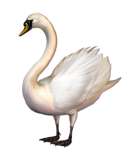 swan transparent standing