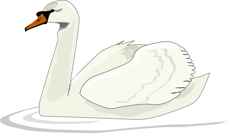 Swan clipart swimming. Illustration of a free