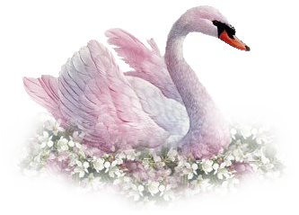 Fur vector swan feather. Download png clip art