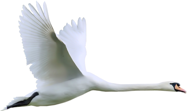 Spread clipart. Swan png
