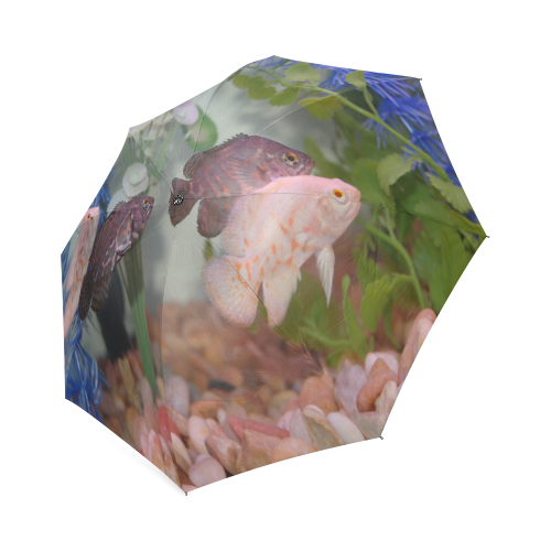 Swimming transparent aquarium. Oscars in an by