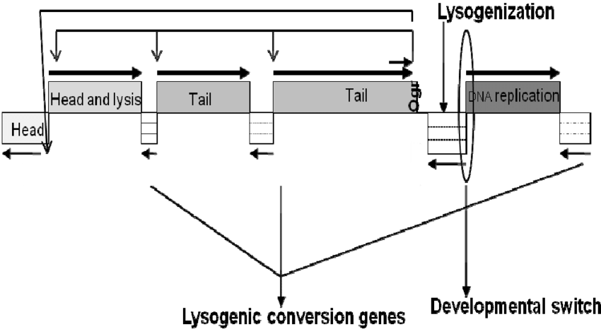 Switch drawing schematic. Of the genome p