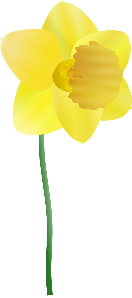 Free botany pictures download. Daffodil clipart wind black and white