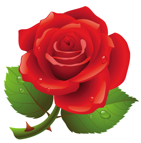 Sympathy clipart red rose. Gallery roses png