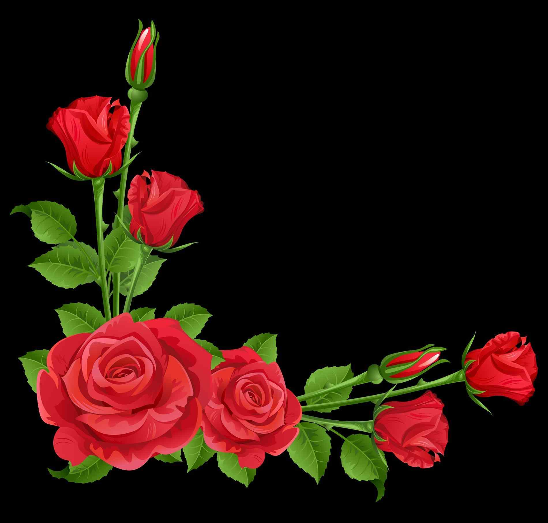 Sympathy clipart red rose. Stock photo by nobackscom