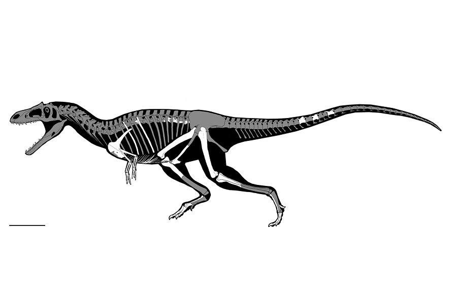 T rex arms png. Wasn the only dinosaur
