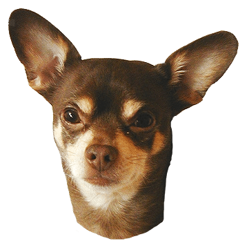 Taco bell dog png. Can you be arrested