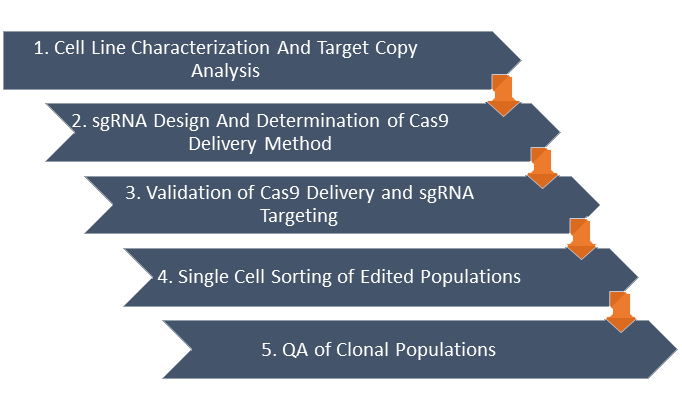 Targeting vector hit. A guide to crispr