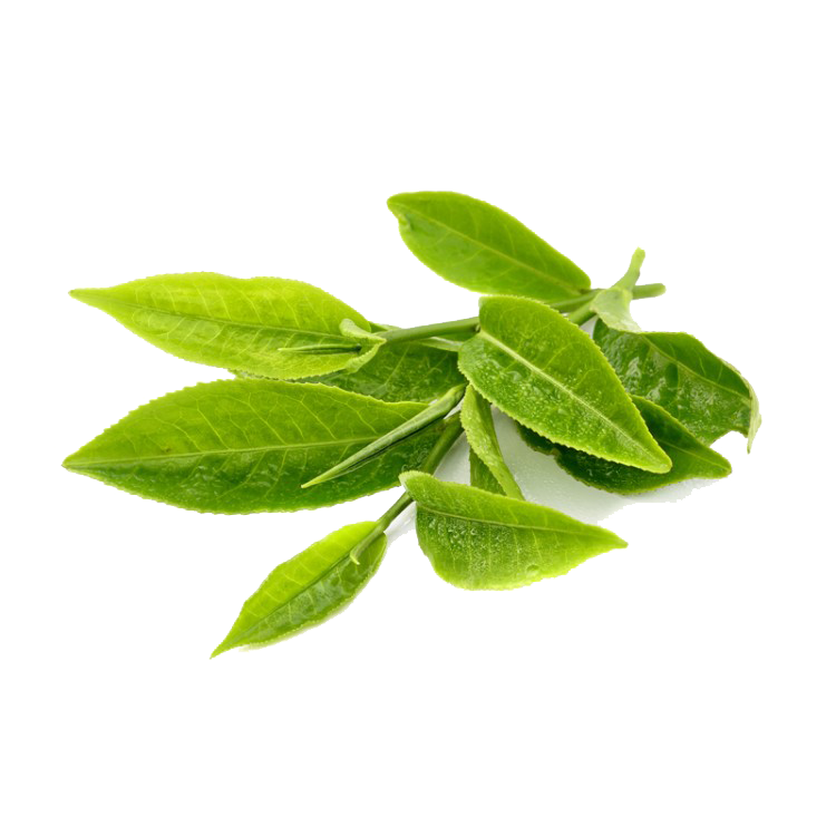 Tea leaves png. Hq green transparent images